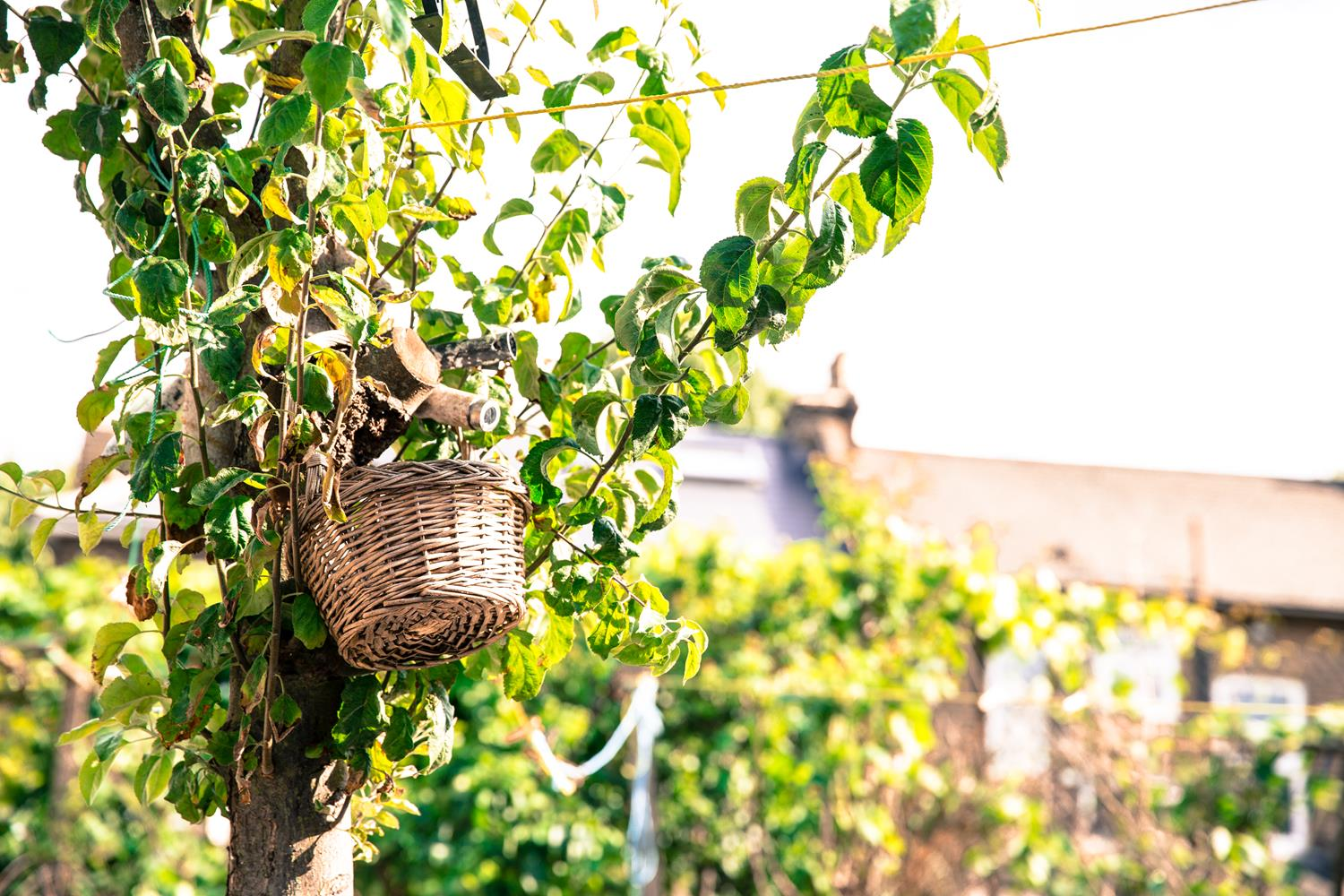 London Garden Photography Basket on Apple Tree by MAKSAM Photography